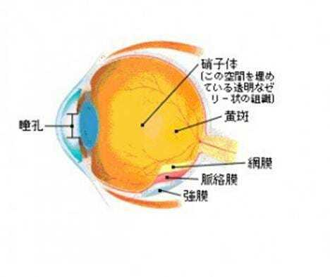 眼球図181016