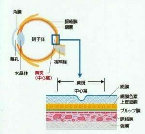 黄斑中心窩